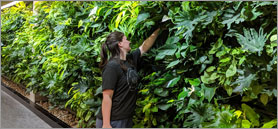 Ontario university honours pioneering architect with green wall