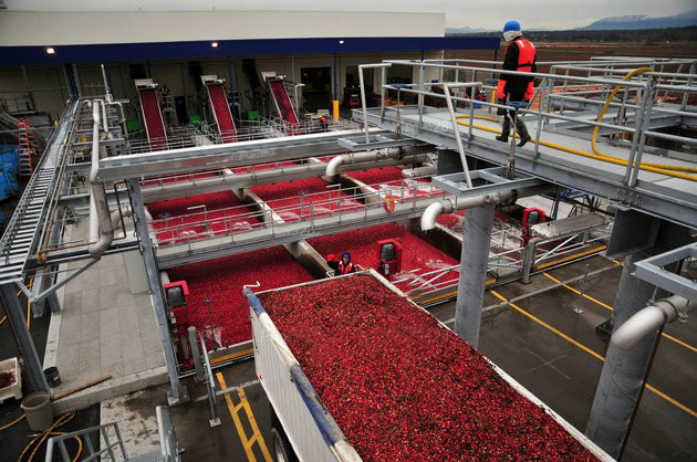 The Ocean Spray Receiving Station in Richmond, B.C., was presented with a 2014 Excellence in Hot-Dip Galvanizing Award. Hot-dip galvanizing was used to mitigate the moisture throughout the cleaning, sorting, and storing processes. Photo courtesy AGA