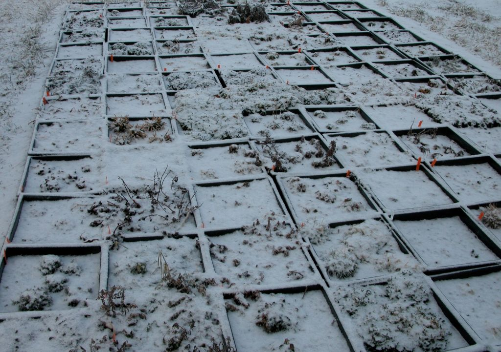 This photo shows plants under severe ice storm.