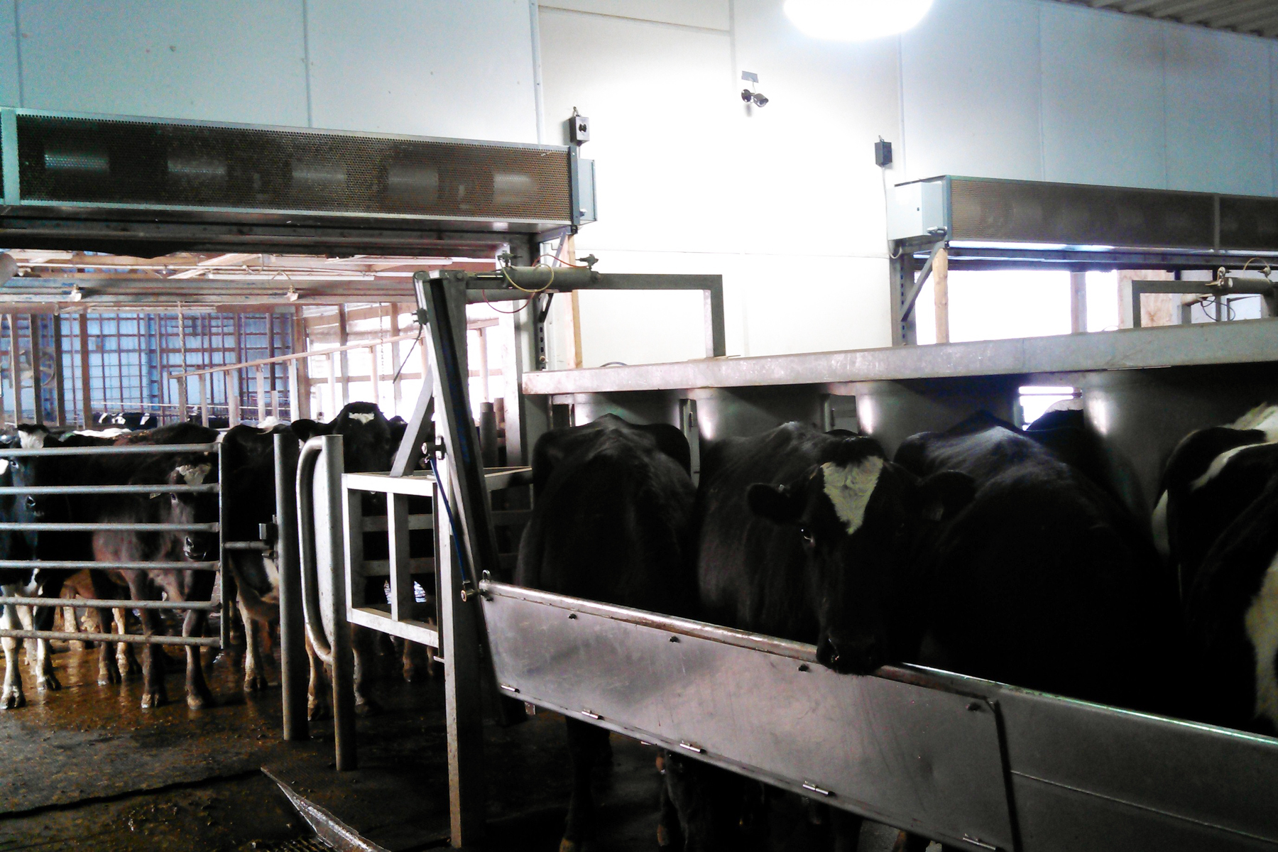 Farmers can employ air curtain technology for preventing energy losses and flying insect infiltration of agricultural buildings. Griesen's Family Dairy (Wisconsin) installed two 4.6-m (16-ft) long air curtains—once custom orders, but now catalogue items for some manufacturers, reducing cost and availability wait times.