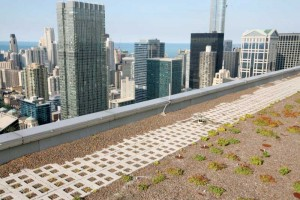 Soil scour on a Chicago high-rise. The plantings are one year old, and have not yet fully rooted. Photo courtesy LiveRoof