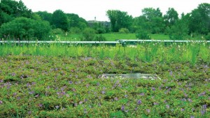 The Earth Rangers Centre's green roof helps keep the building cool and acts as extra insulation. Photos courtesy TRCA