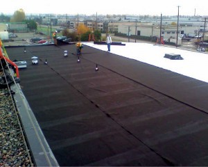The roofers install a protective fleece over a finished single-ply roof before green roof installation starts.