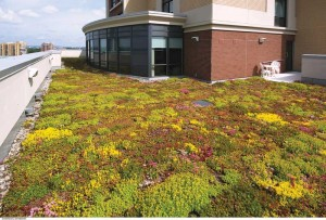 The building's green roof contains native plant species, absorbs rainwater, and helps reduce the urban heat island (UHI) effect.