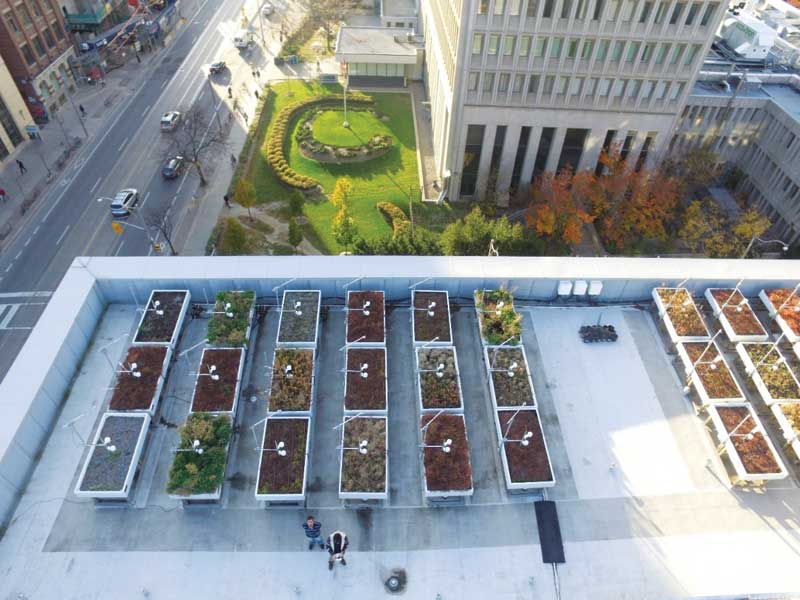 Growing Green Roof Research In Toronto Construction Canada
