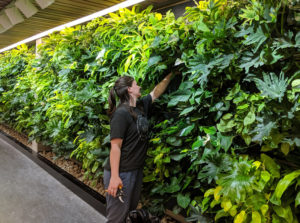 A newly installed green wall is the centerpiece in Trent University's Bata Library in Peterborough, Ont. Photo courtesy Trent University
