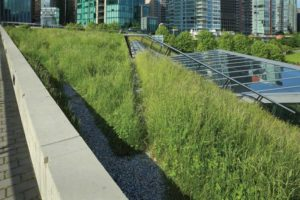 The Association de la construction du Québec (ACQ) is fighting a new bylaw mandating green roofs in Gatineau, Qué. (The photo is provided for illustrative purposes only.) Photo courtesy University of Toronto GRIT Lab
