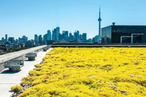 Figure 1: A green roof installed on a high-rise building in Toronto. Photo © Greg Van Riel Photography