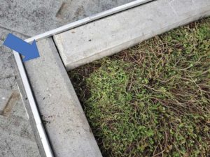 Figure 7: Sedum plants did not suffer much damage after the wind flow test.
